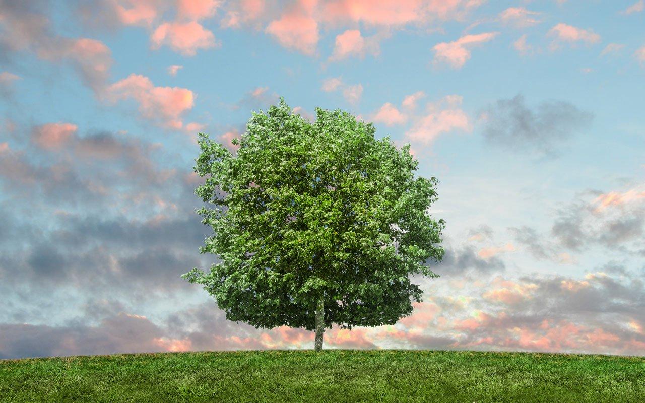 Eco-Friendly-Ideas