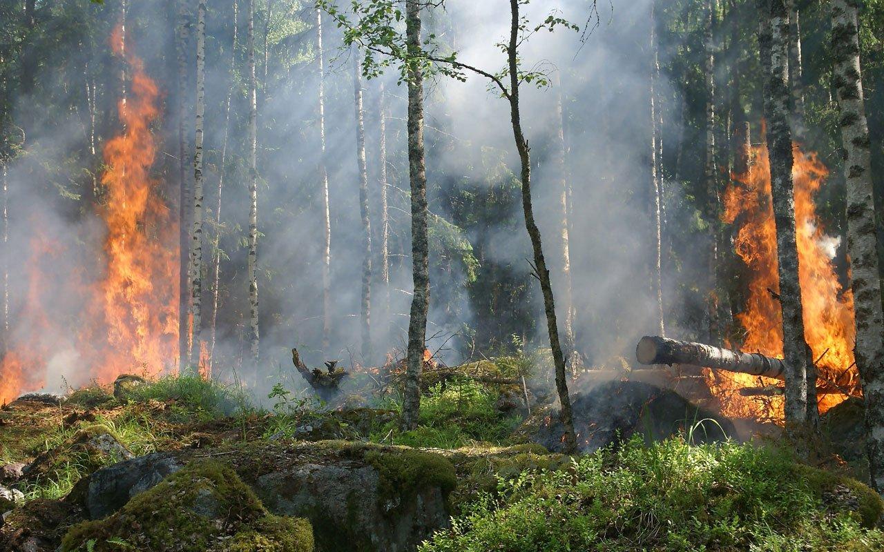 Wildfire-preparedness