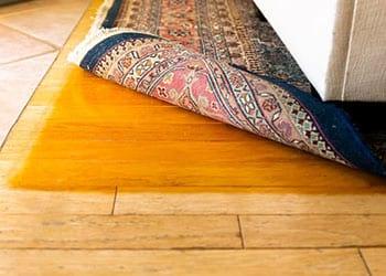 Hardwoord floor fading residential carpet